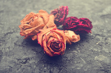 Macro Photo Of Buds Of Dry Red Roses On A Black Concrete Surface.