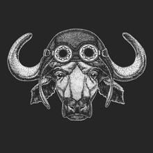 Buffalo, Bull, Ox Hand Drawn Illustration For Tattoo, Emblem, Badge, Logo, Patch, T-shirt Cool Animal Wearing Aviator, Motorcycle, Biker Helmet.
