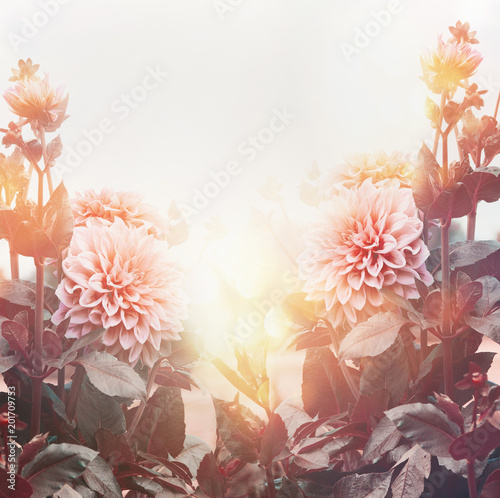 Beautiful flowers in garden or park in sunset light, floral background, summer outdoor nature