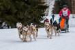Schlittenhunde Rennen im kalten Winter, Husky_007