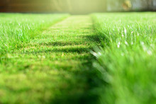 Mowing The Lawn. A Perspective Of Green Grass Cut Strip. Selective Focus