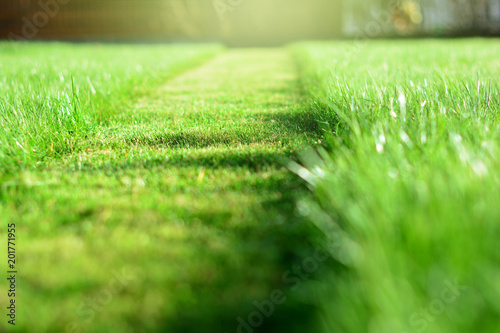 Poster Gras mowing the lawn. A perspective of green grass cut strip. Selective focus