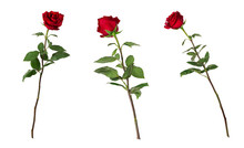 Set Of Three Beautiful Vivid Red Roses On Long Stems With Green Leaves Isolated On White Background. One Flower Shot At Different Angles