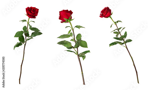 Set of three beautiful vivid red roses on long stems with green leaves isolated on white background. One flower shot at different angles © katiko2016