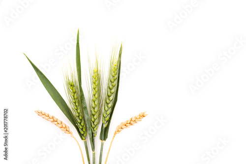 Canvas Print Ears of wheat isolated on white background.