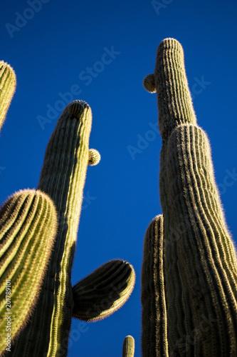 Keuken foto achterwand Cactus cactus