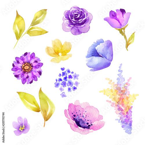 Photo  watercolor illustration, botanical design elements, isolated floral clip art, vi