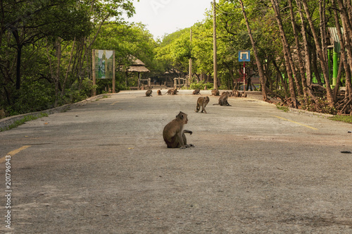 Photo wild rhesus monkies vietnam scenic area