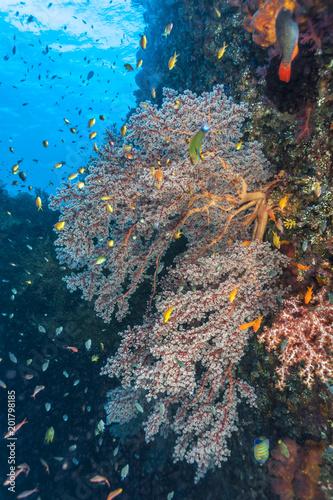 Staande foto Koraalriffen Coral reef off coast of Bali