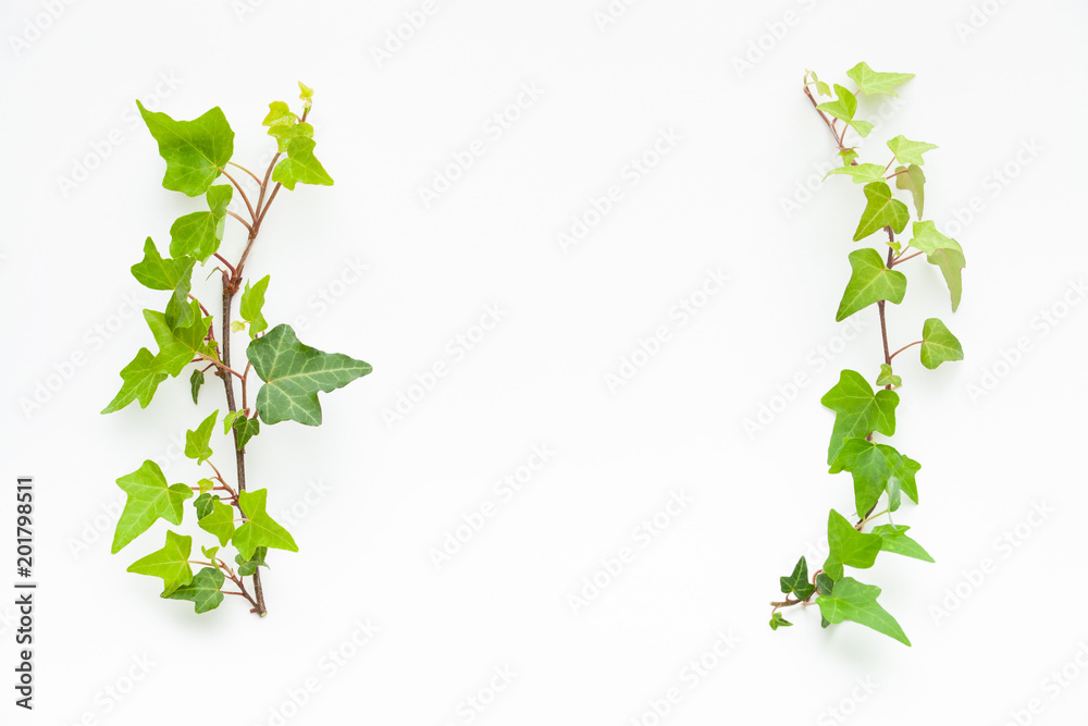 Fototapety, obrazy: 観葉植物のフレーム