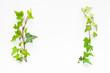 Leinwandbild Motiv 観葉植物のフレーム