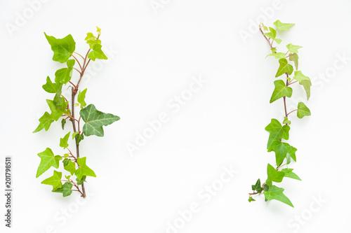 観葉植物のフレーム