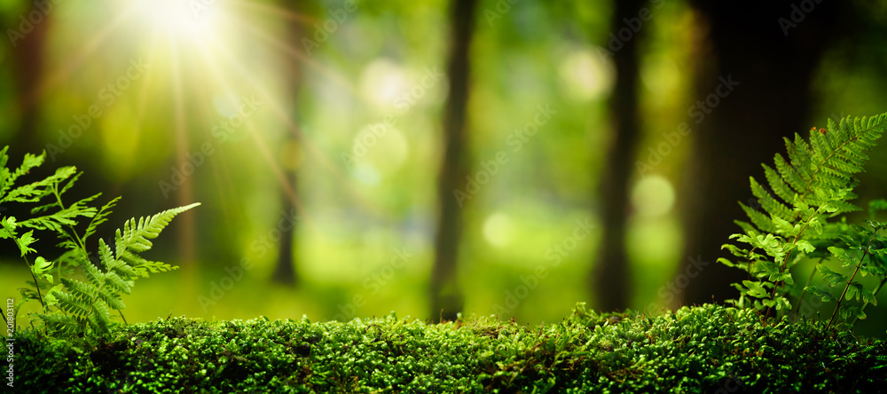 Fototapety, obrazy: Closeup on moss in forest