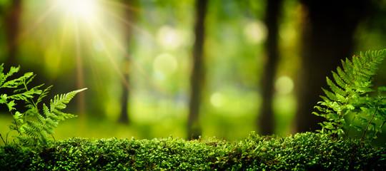 Zbliżenie na mech w lesie