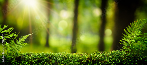Obraz Closeup on moss in forest - fototapety do salonu