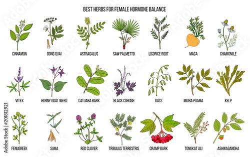 Obraz na płótnie Best herbs for female hormone balance