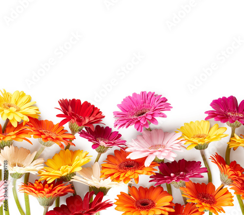 Staande foto Gerbera Gerbera flowers isolated on white background