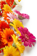 Gerbera Flowers Isolated On Wh...