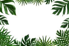 Tropical Green Leaf Frame On White Background