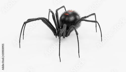 Realistic 3D Render of Black Widow Spider Canvas Print
