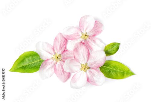 Apple tree blossom green leaves Spring flowers