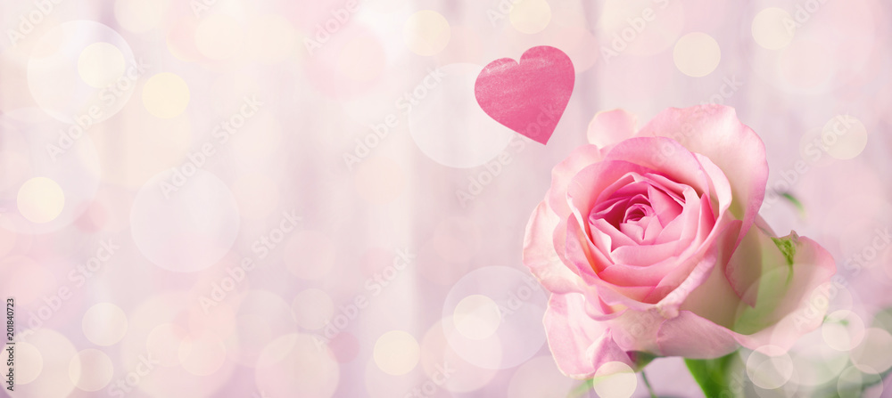 Fototapety, obrazy: Romantic rose flower background with heart