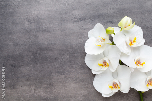 Beauty orchid on a gray background. Spa scene.