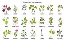 Best Medicinal Herbs For Fibro...