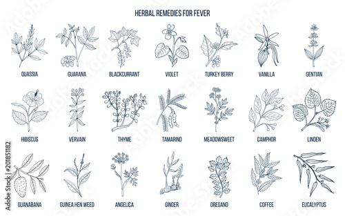 Photo  Best medicinal herbs for fever