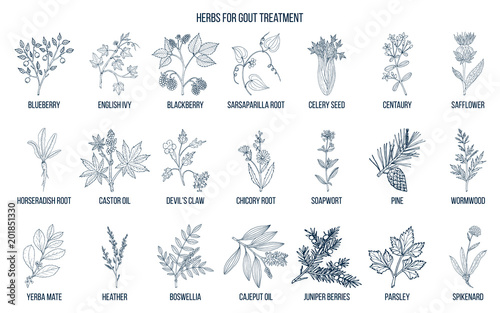 Photo  Collection of natural herbs for gout treatment