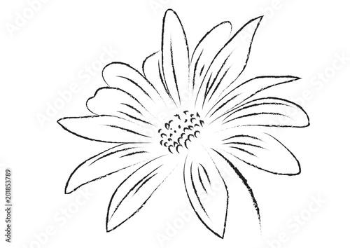 Fotografie, Obraz  Gerbera flower black and white isolated vector illustration, abstract gerbera fl