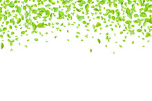 Vector Fresh Spring Green Leaves Background For Greeting Card In Flat Style
