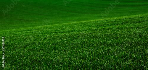 Papiers peints Pres, Marais Green grass fields suitable for backgrounds or wallpapers, natural seasonal landscape.