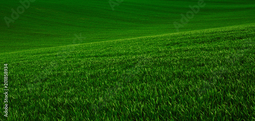 Stickers pour porte Pres, Marais Green grass fields suitable for backgrounds or wallpapers, natural seasonal landscape.