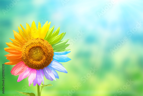 Sunflower with petals painted in rainbow colors