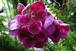 Orchideen, Orchideenaustellung, Blumengärten Hirschstetten, Wien, Österreich, Europa