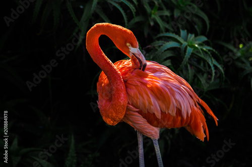 Tuinposter Flamingo Pink flamingo in the park