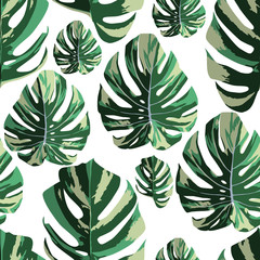 Tropical monstera leaves seamless pattern white background