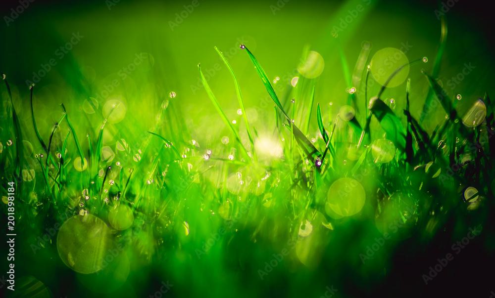 Fototapeta soczysta zielona trawa pokryta rosą