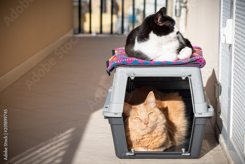 Two Cats Taking Sun One Inside On A Cat Carrier And One Above