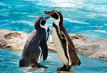 Two Penguins Are Standing By The Water