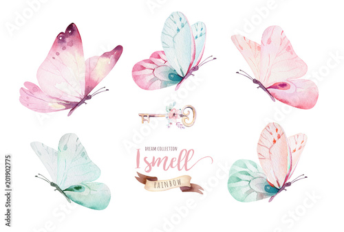 Fotografie, Obraz  Watercolor colorful butterflies, isolated on white background