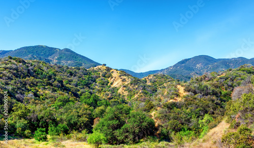Foto op Aluminium Blauw High brush on spring hillsides in Southern California