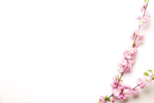 Bunch Of Spring Flowering Branches With A Lot Of Pink Blossoms And Green Leaves On Blank White Background. Rustic Composition W/ Spring Flowers For Women's Mother's Day. Close Up, Copy Space, Top View