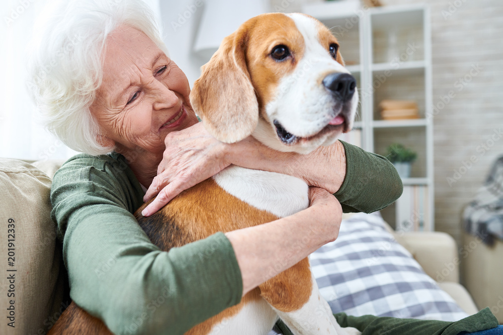 Fototapety, obrazy: Cheerful retired senior woman with wrinkles smiling while embracing her Beagle dog and enjoying time with pet at home