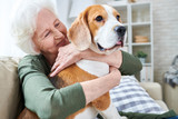 Fototapeta Zwierzęta - Cheerful retired senior woman with wrinkles smiling while embracing her Beagle dog and enjoying time with pet at home