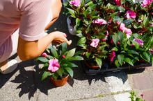 A Woman Chooses Plants Careful...