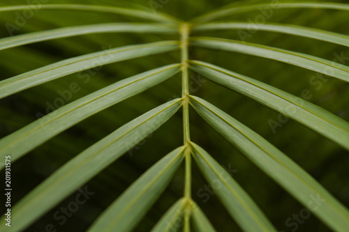 An exotic Areca palm plant leaves close-up picture Canvas Print
