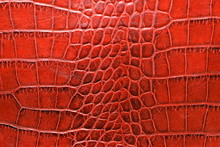 Aged Alligator Leather In Red Color Tone Close Up