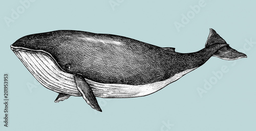 Photo  Hand drawn blue whale retro style